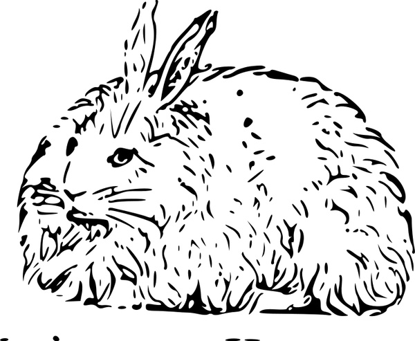 600x493 Angora Rabbit Free Vector In Open Office Drawing Svg ( Svg