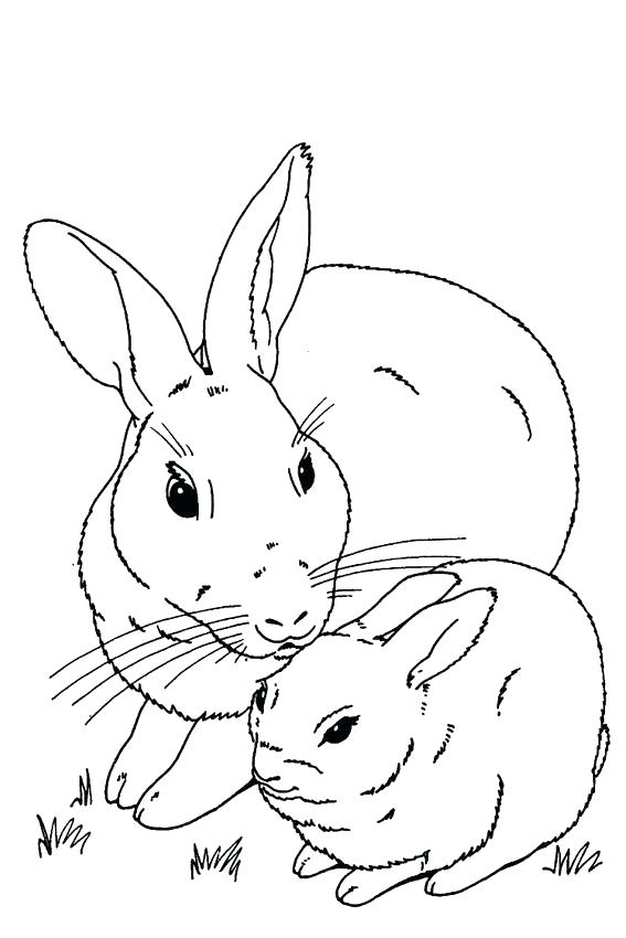 567x850 Roger Rabbit Coloring Pages Coloring Pages Rabbit Baby Rabbit