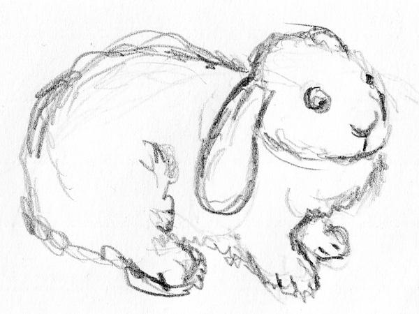 600x450 Bunny Sketches Son's Popkes