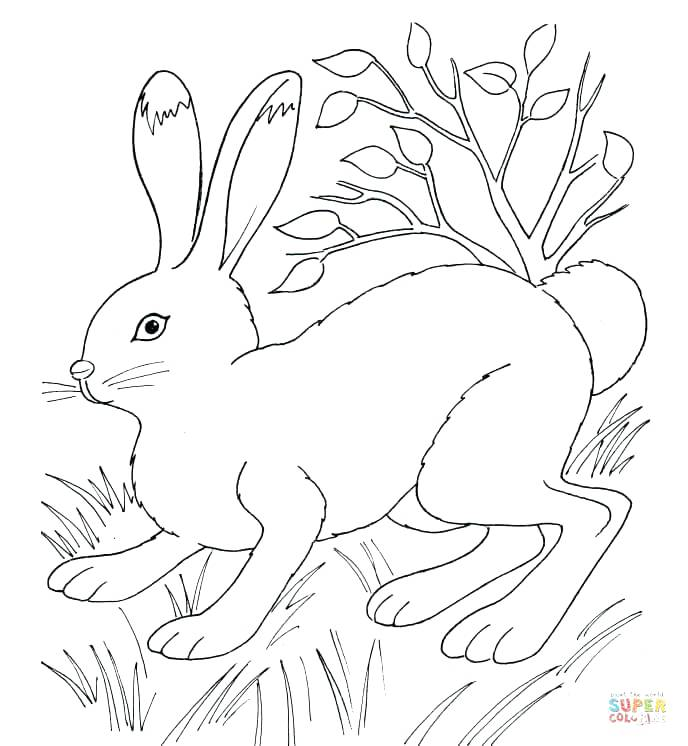 688x746 Coloring Pages Rabbit Rabbit In The Grass Rabbids Invasion