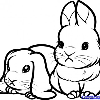 320x320 Outline Drawing Of Rabbits Clipart Best Rabbit