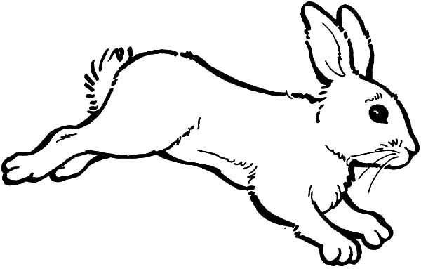 Rabbit Outline Drawing at GetDrawings.com | Free for personal use ...