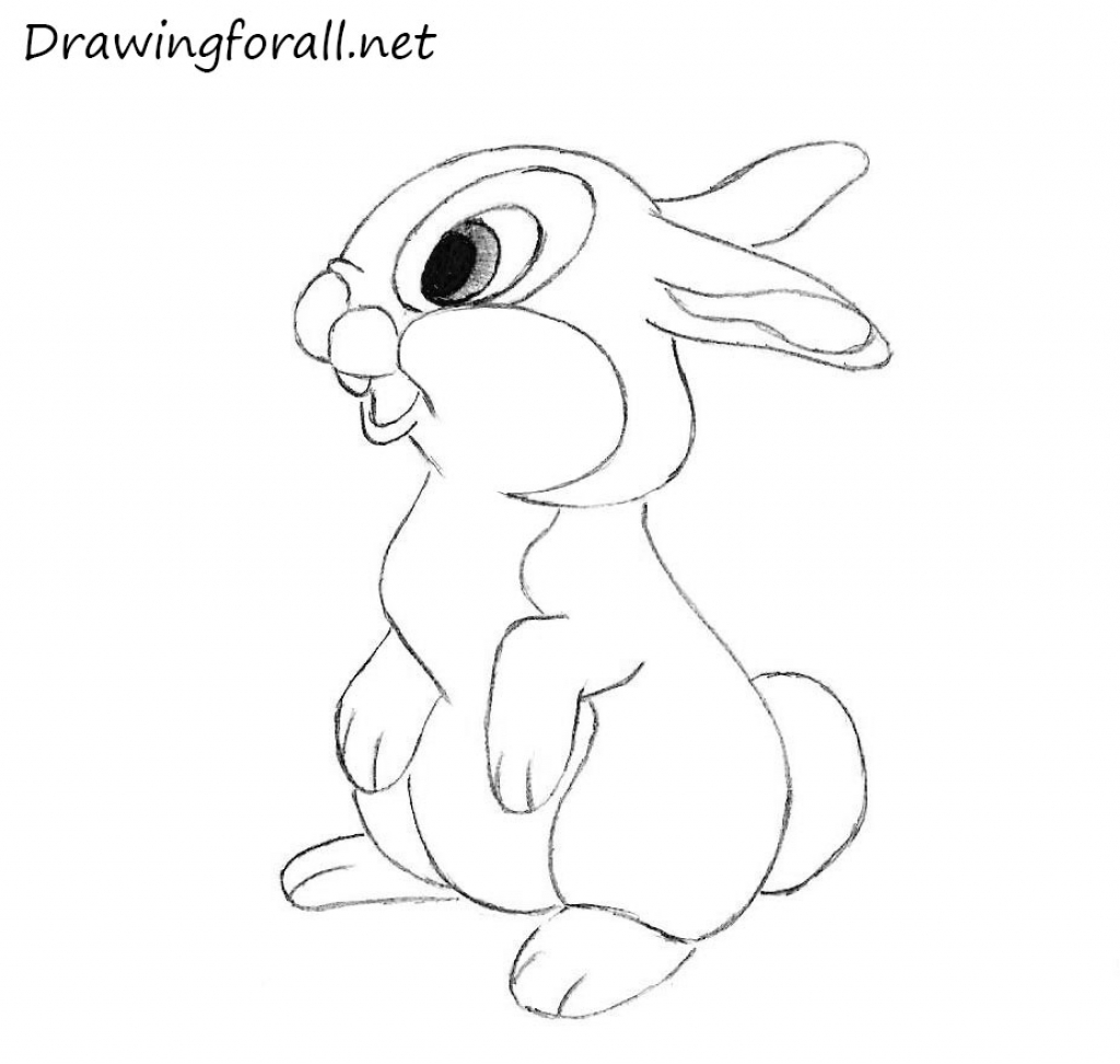 1024x972 How To Draw A Rabbit