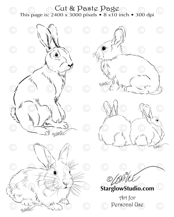 570x713 4 Bunny Rabbit Drawings Sketches Clip Art Diy By Starglowstudio