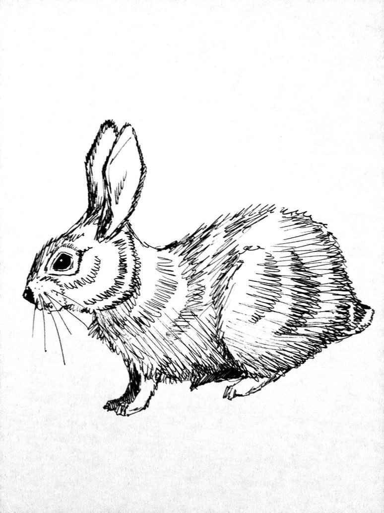 774x1032 Rabbit Sketch By Mikeleeorg