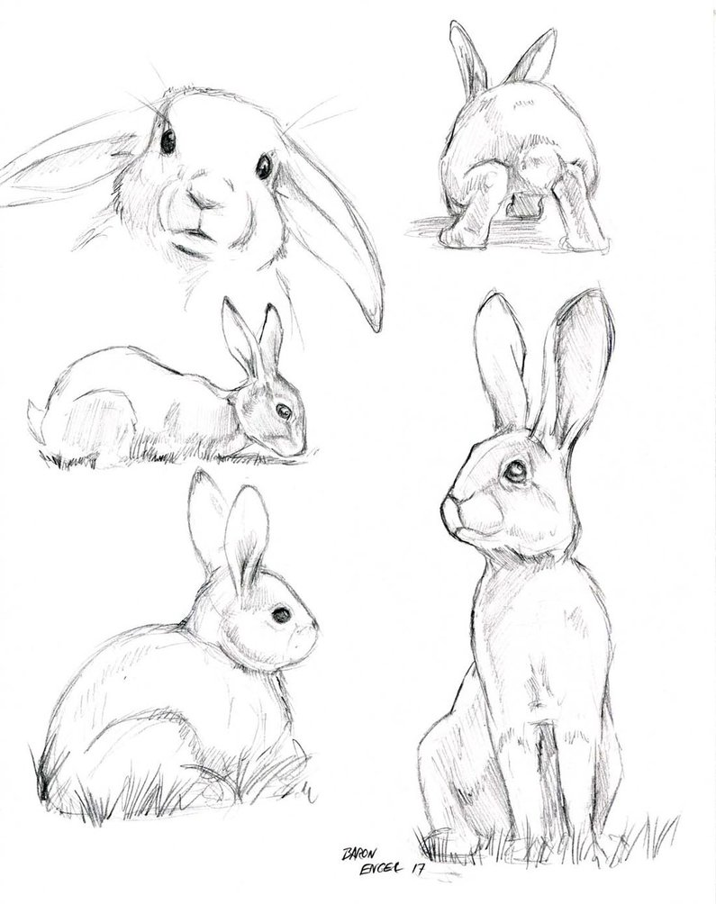 795x1004 Rabbit Study Sketches 01 By Baron Engel