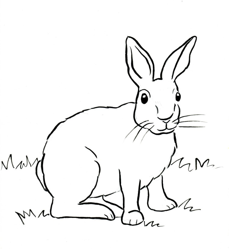 760x826 Cottontail Rabbit Coloring Page
