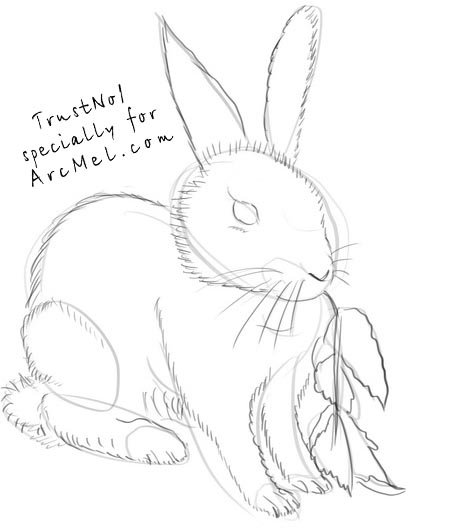 450x531 How To Draw A Bunny Step By Step