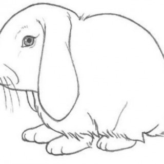 320x320 Tag For Pictures Of Bunnies Draw Many Rabbits Drawing How