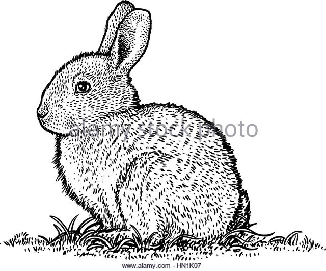 640x531 Bunny Rabbit Illustration Stock Photos Amp Bunny Rabbit Illustration