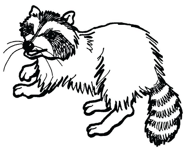 768x666 Entertaining Raccoon Coloring Pages Kids Beautiful Free Download