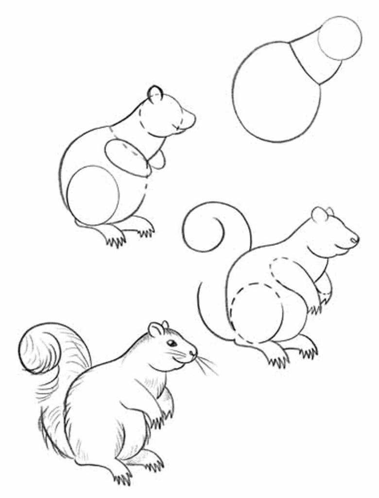 780x1024 How To Draw Forest Animals Step By Step Easy Raccoon Drawing How