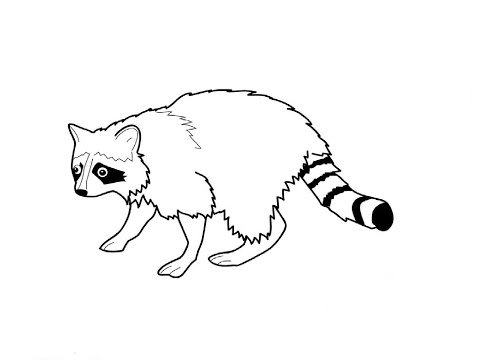 480x360 How To Draw A Raccoon (Simple, Easy Drawing)