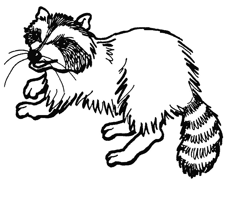 768x666 Raccoon Coloring Pages Sheets Raccoon Coloring Page 35