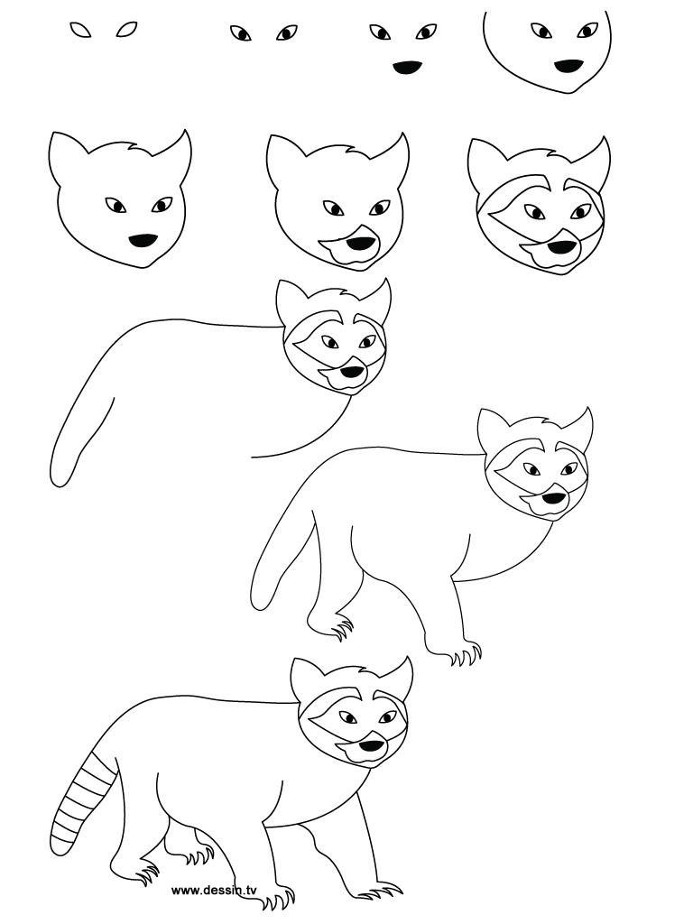 Raccoon Drawing Step By Step at GetDrawings.com | Free for personal ...