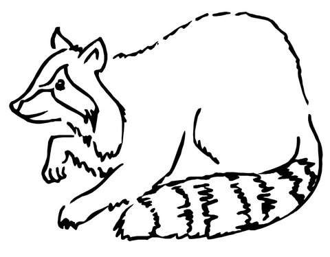 Line Drawing Hedgehog : Hand drawn sketch cartoon illustration of hedgehog vector clip