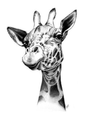 300x400 Gallery For Gt Pencil Drawings Of Giraffes Applique Quilt Ideas