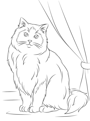 358x480 Ragdoll Cat Coloring Page From Cats Category. Select From 25105