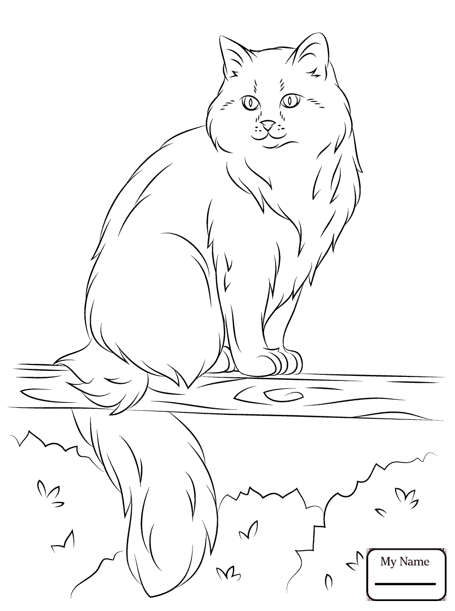 Ragdoll Cat Coloring Pages - Worksheet & Coloring Pages