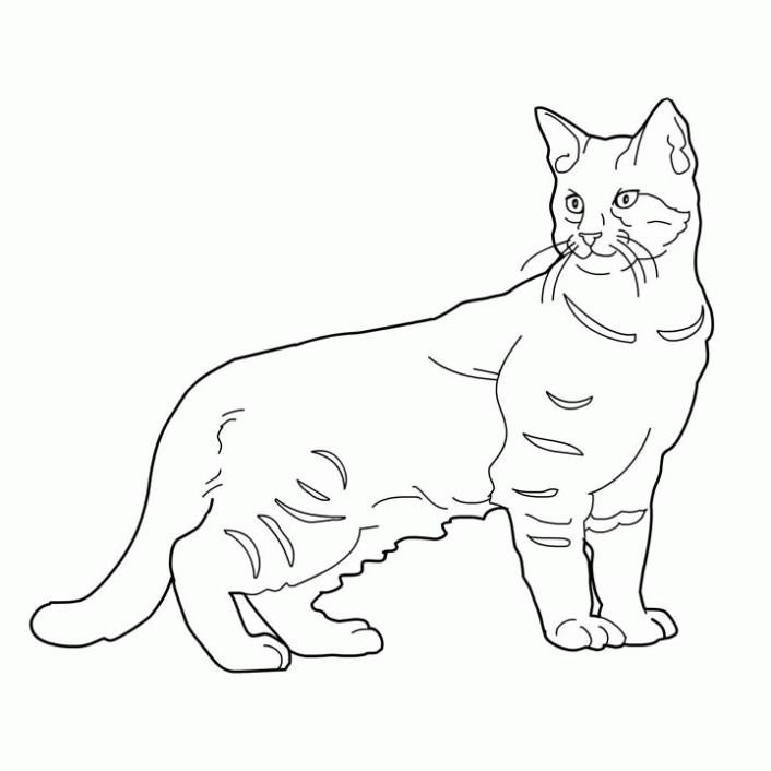 Ragdoll Cat Drawing at GetDrawings.com | Free for personal use ...