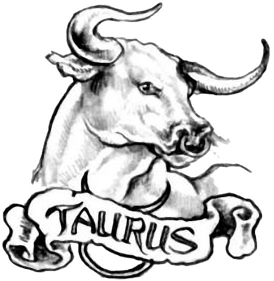 549x563 Collection Of Bull Face Tattoo Design
