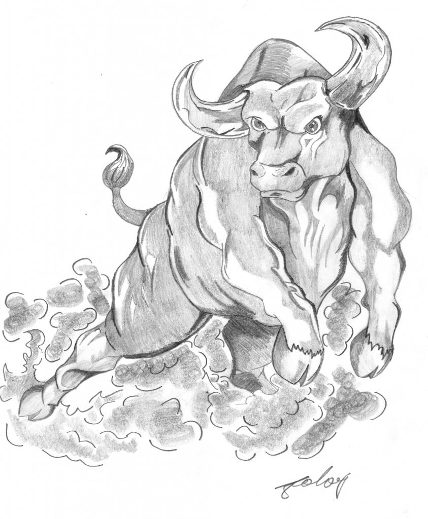 843x1024 Drawings Of Bulls Bucking Bull Drawings Related Keywords Amp