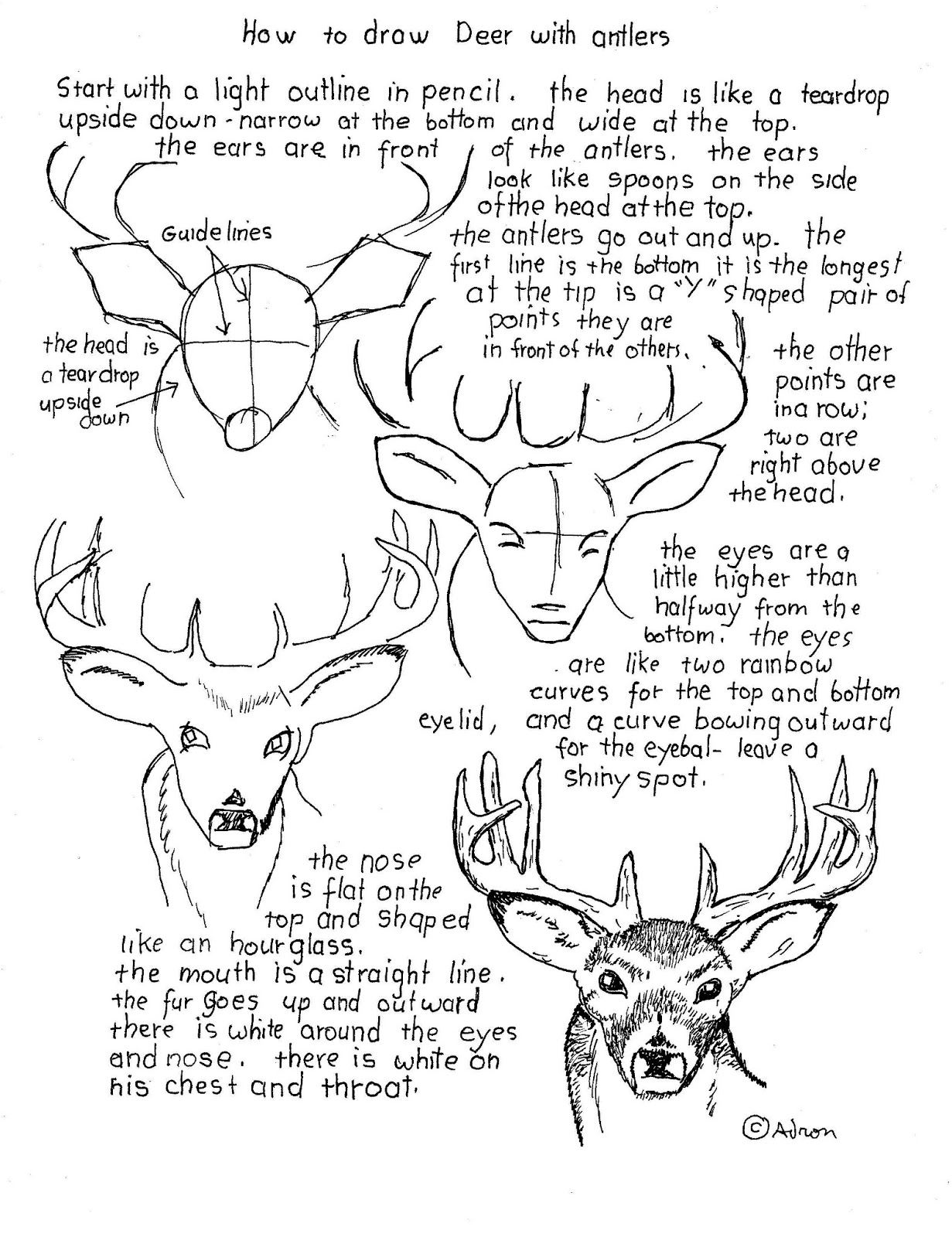 1231x1600 How To Draw Worksheets For The Young Artist How To Draw A Buck
