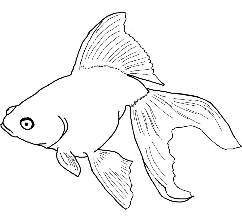 1024x946 Drawn Goldfish