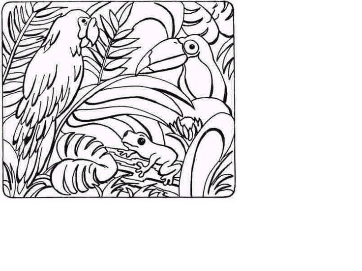 736x552 Drawn Rainforest Coloring Page