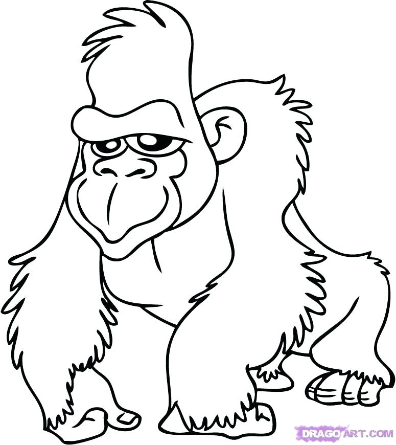 Rainforest Animal Drawing At Getdrawings Com Free For Personal Use