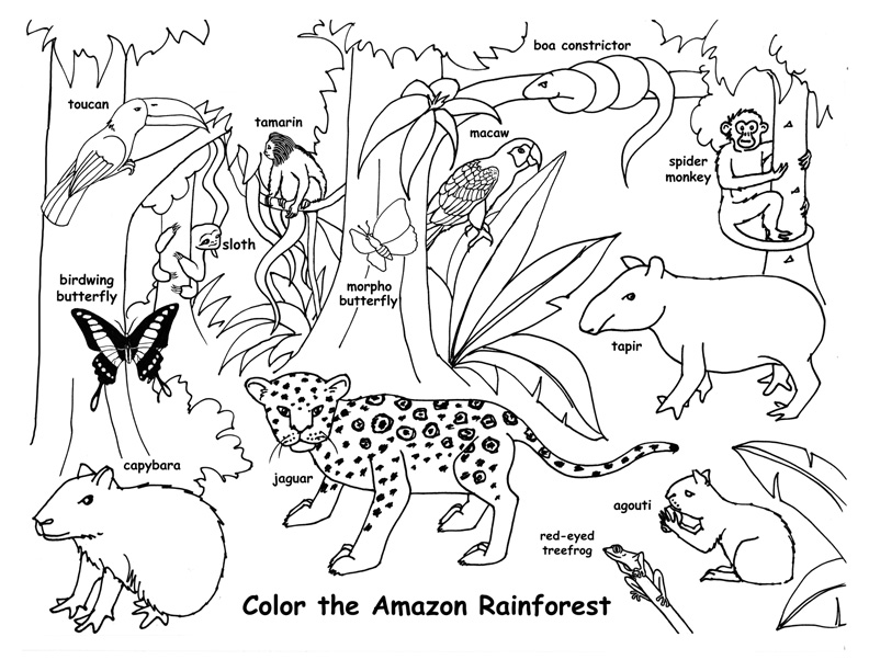 Rainforest Animal Drawing at GetDrawings | Free download
