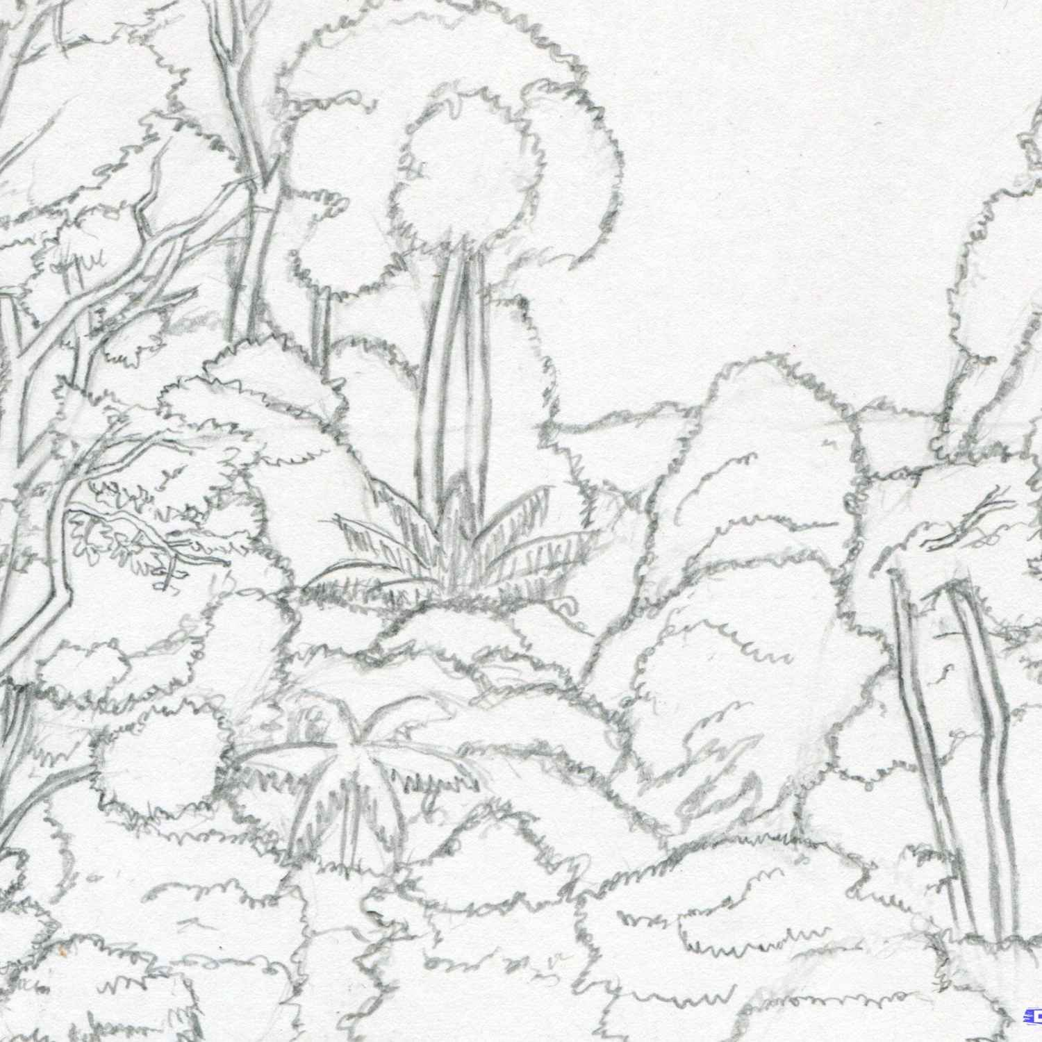 1500x1500 Drawing Of A Tropical Rainforest How To Draw Rainforest Trees