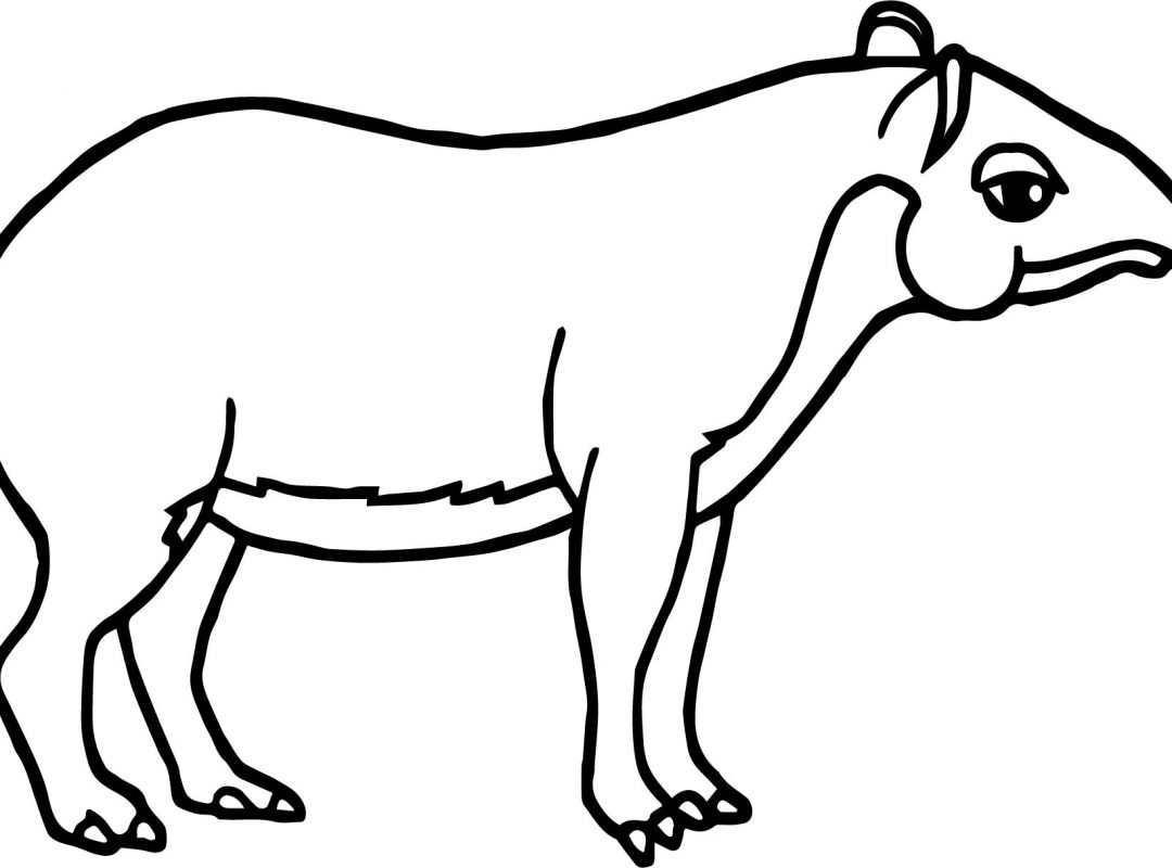 1080x800 Easy Animals Tapir Coloring Page Animal Free To Color Sheet Stock