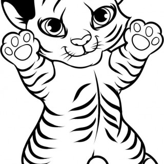 320x320 How To Draw A Cartoon Tiger Step By Rainforest Animals Image