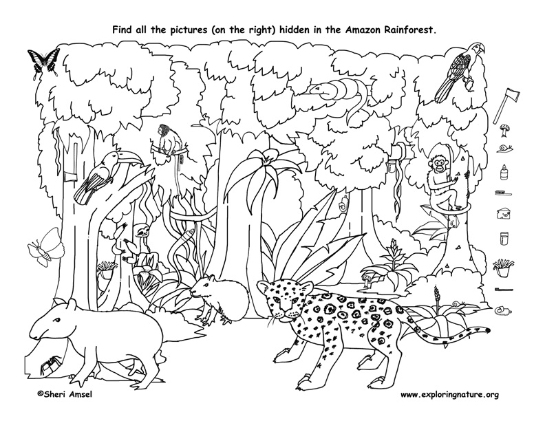 792x612 Amazon Rainforest Ll Coloring Pages For Animals