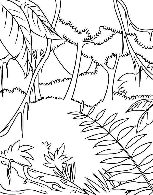 600x761 Rainforest Plants Coloring Sheets Rainforest Waterfalls