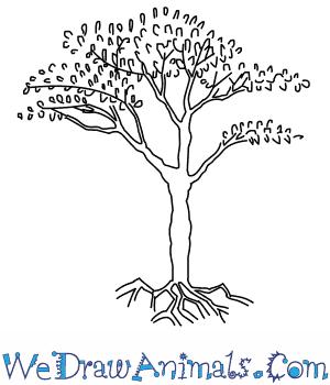 300x350 How To Draw An Acacia Tree