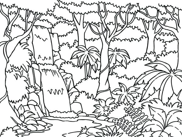 600x453 Rainforest Flowers Coloring Pages Waterfall In The Forest Page