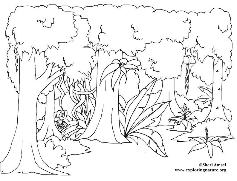 Rainforest Trees Drawi...