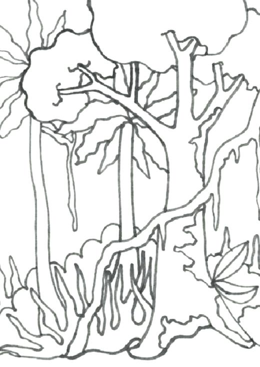 520x735 Rain Forest Coloring Pages Tropical Coloring Pages Related