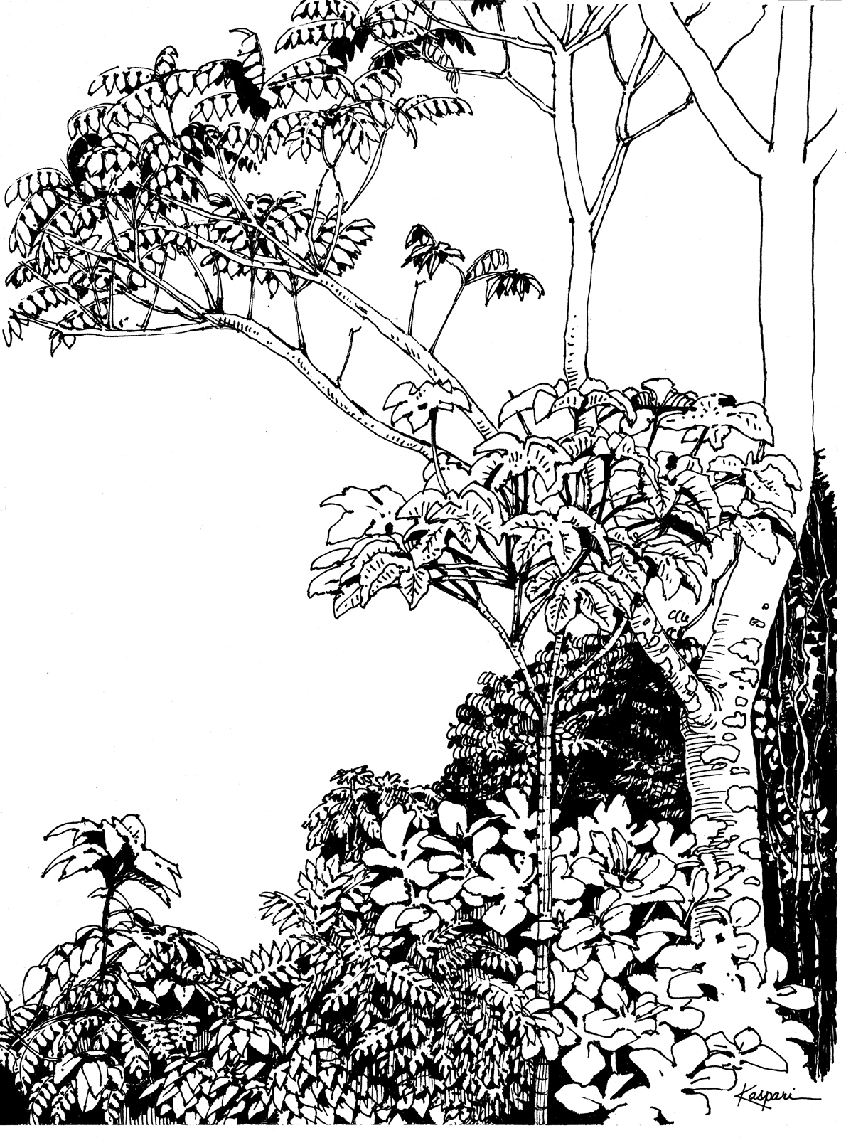 1190x1600 Tropical Rainforest Drawing Drawn Rainforest Tropical Forest