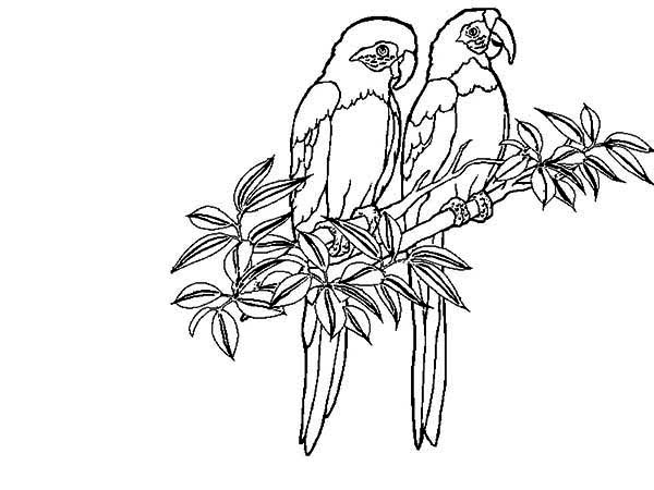600x450 Two Rainforest Bird Coloring Page Two Rainforest Bird Coloring
