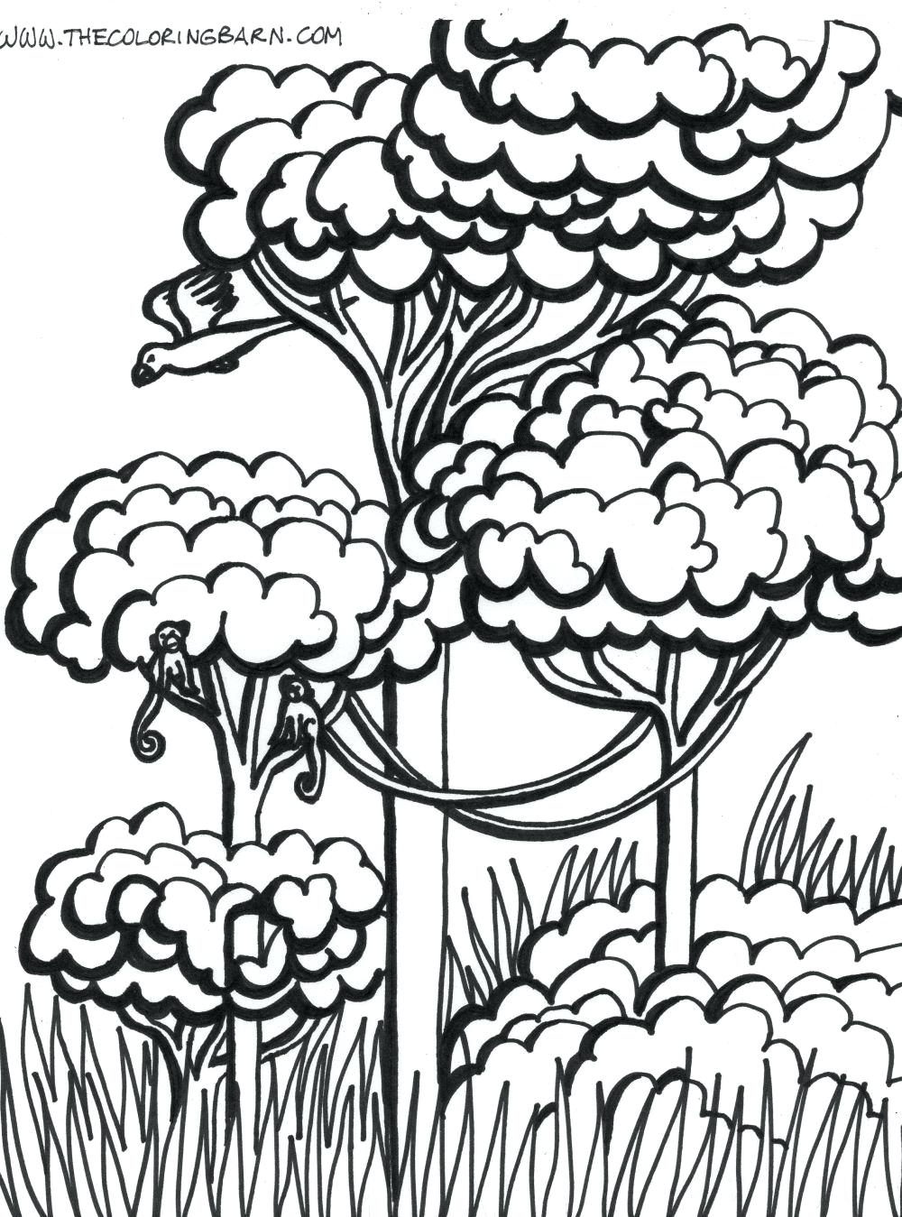 Rainforest Trees Drawing at GetDrawings.com | Free for personal use ...
