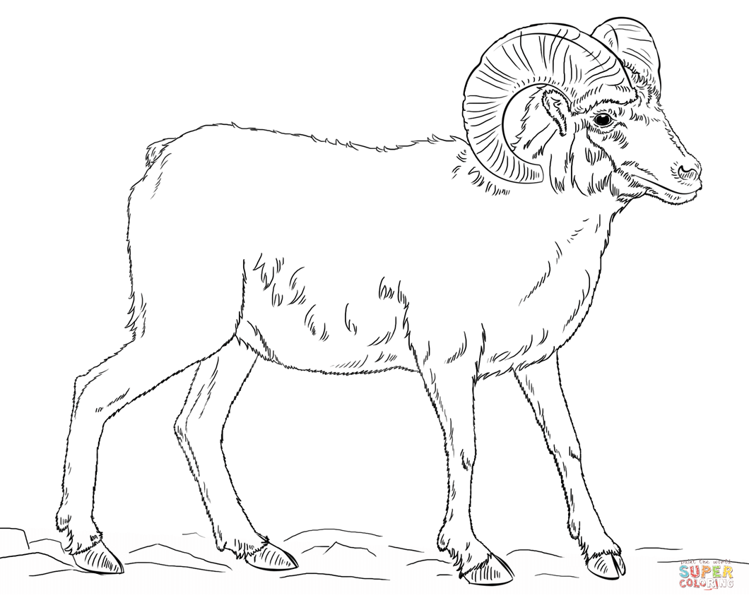 Ram Goat Coloring Pages - Worksheet & Coloring Pages