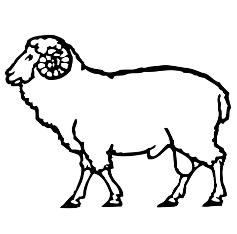 480x474 Ram Coloring Page Free Printable Coloring Pages