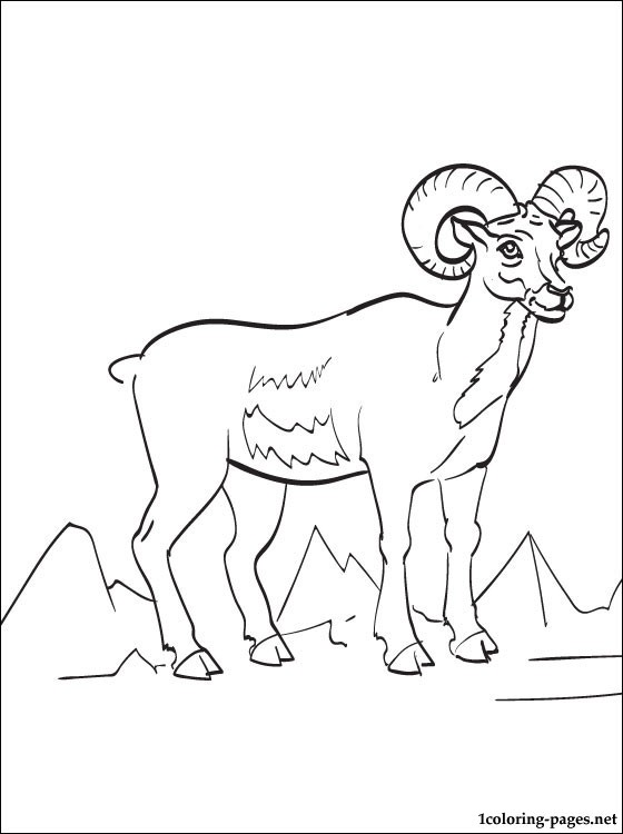 560x750 Ram Printable And Coloring Page Coloring Pages