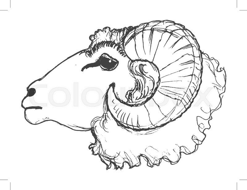 800x617 Vector, Sketch, Hand Drawn Illustration Of Ram Stock Vector