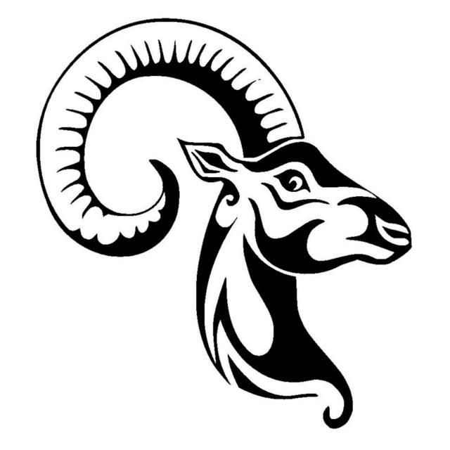 Ram Horns Drawing