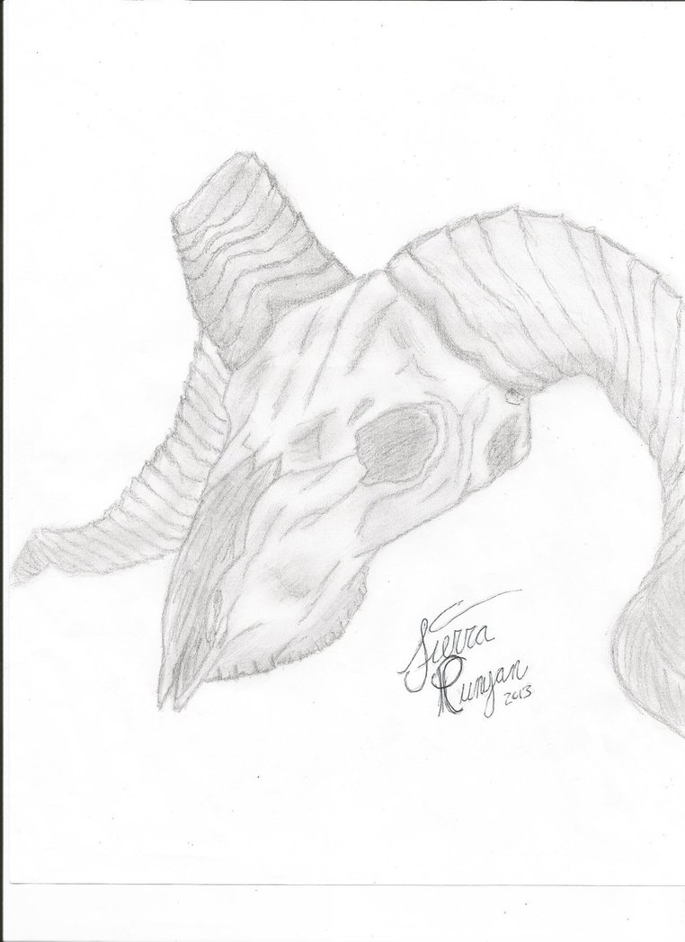 762x1048 Ram Skull Drawing (Finished) By Horse Creek Ranch