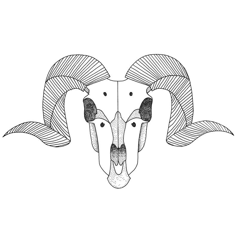 800x800 Ram Skull Throw Pillows By Tesni Southwell Redbubble